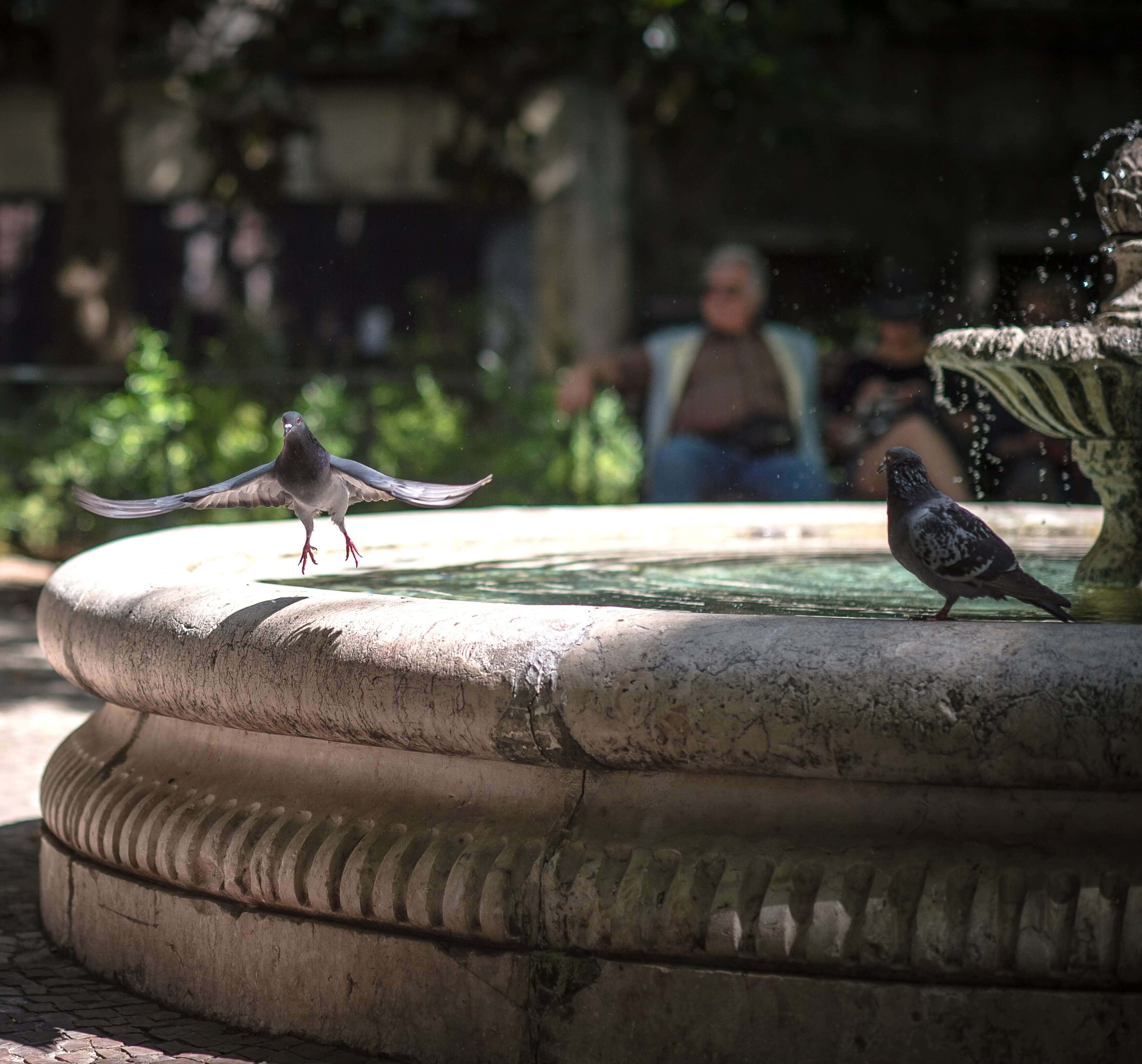 What Affect Do Outdoor Birdbaths Have On Birds And Humans?