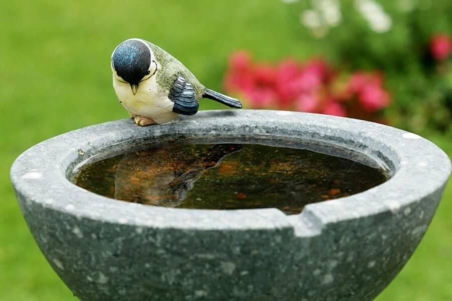 Why Are The Birds Not Using My Bird Bath? - Bird Baths For Sale