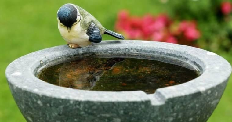Help! The Birds Are Not Using My Bird Bath