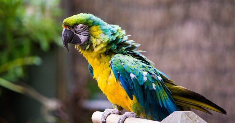 How To Rock The Best Outdoor Parrot Aviary In Your Neighborhood
