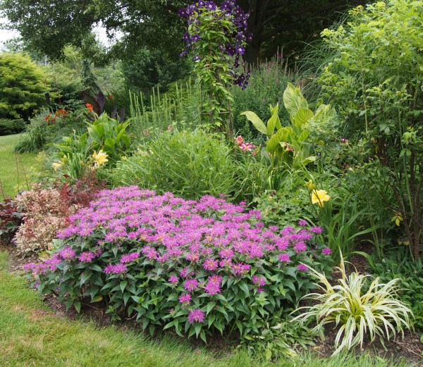 flowers friday perennial garden