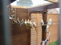 Outdoor Aviaries For Birds | Birdcage Design Ideas