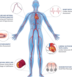 autonomic nervous system and vascular function assessments [ 1134 x 913 Pixel ]