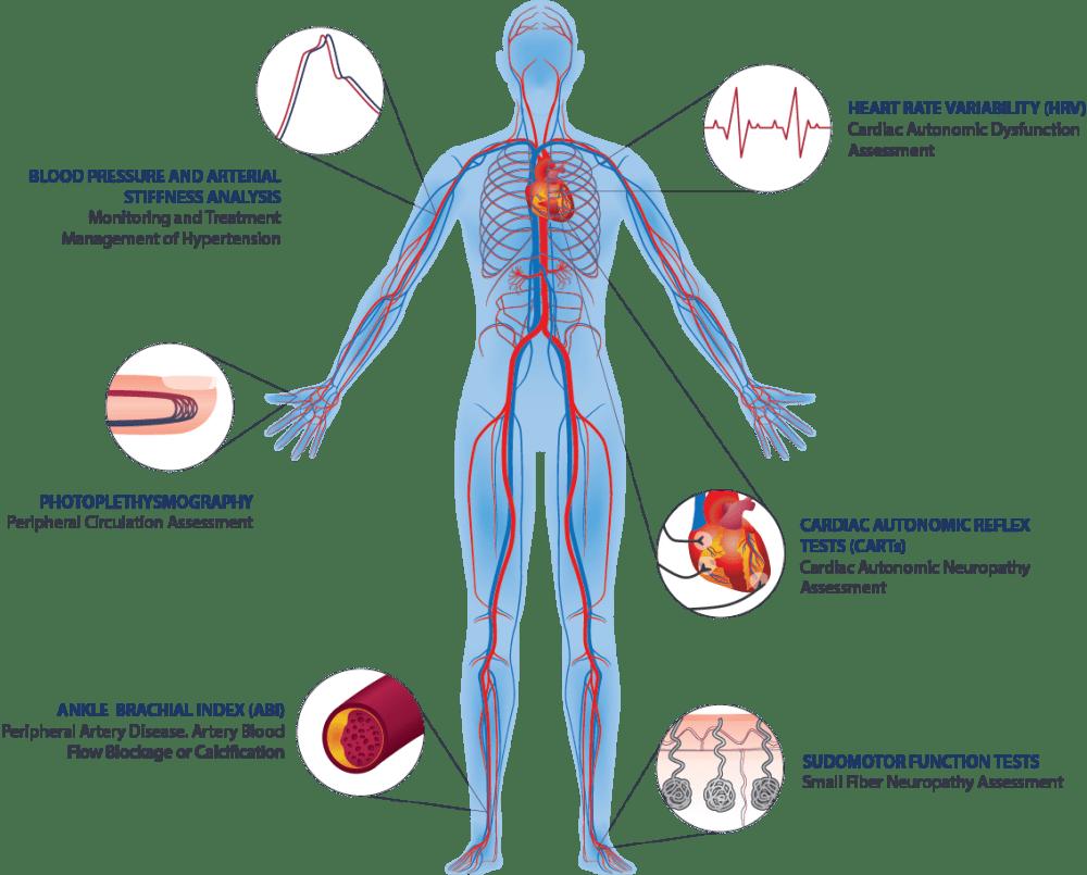 medium resolution of autonomic nervous system and vascular function assessments