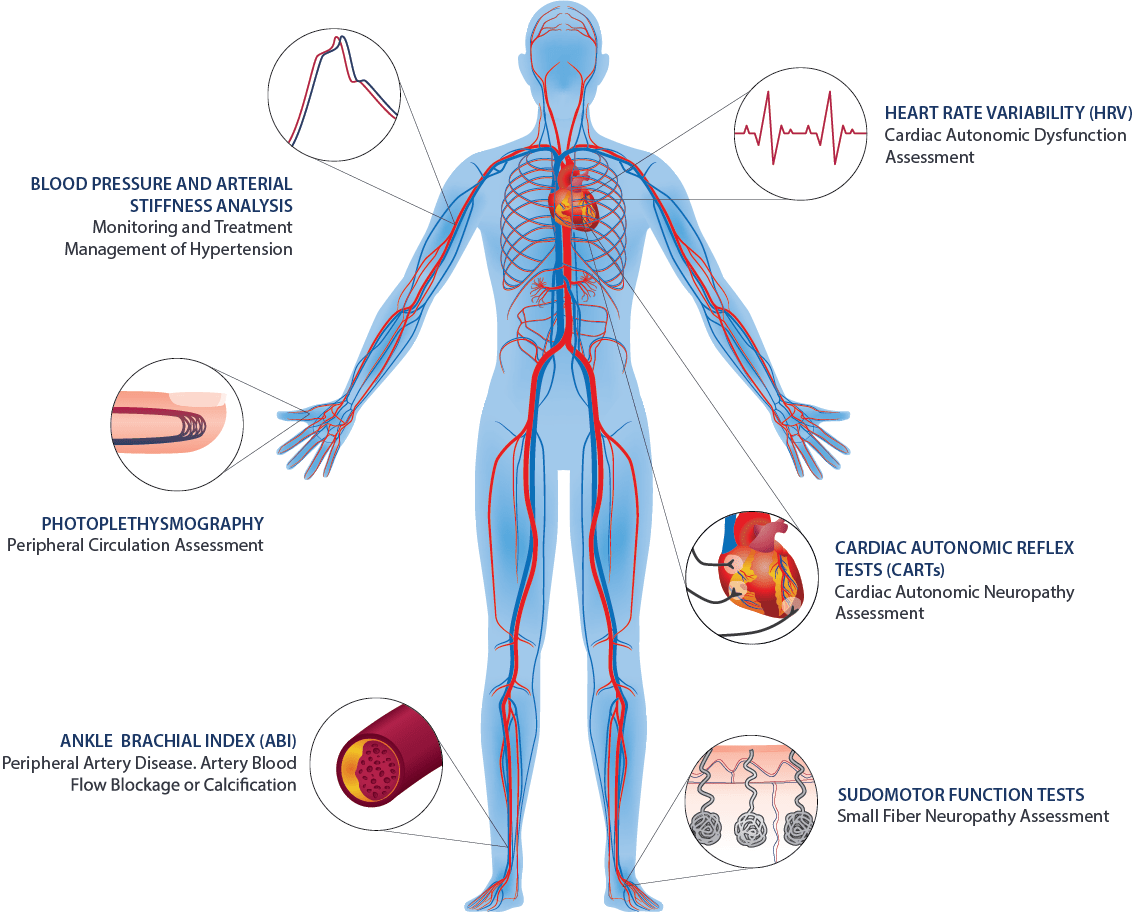 hight resolution of autonomic nervous system and vascular function assessments