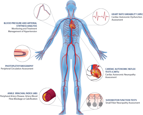 small resolution of autonomic nervous system and vascular function assessments