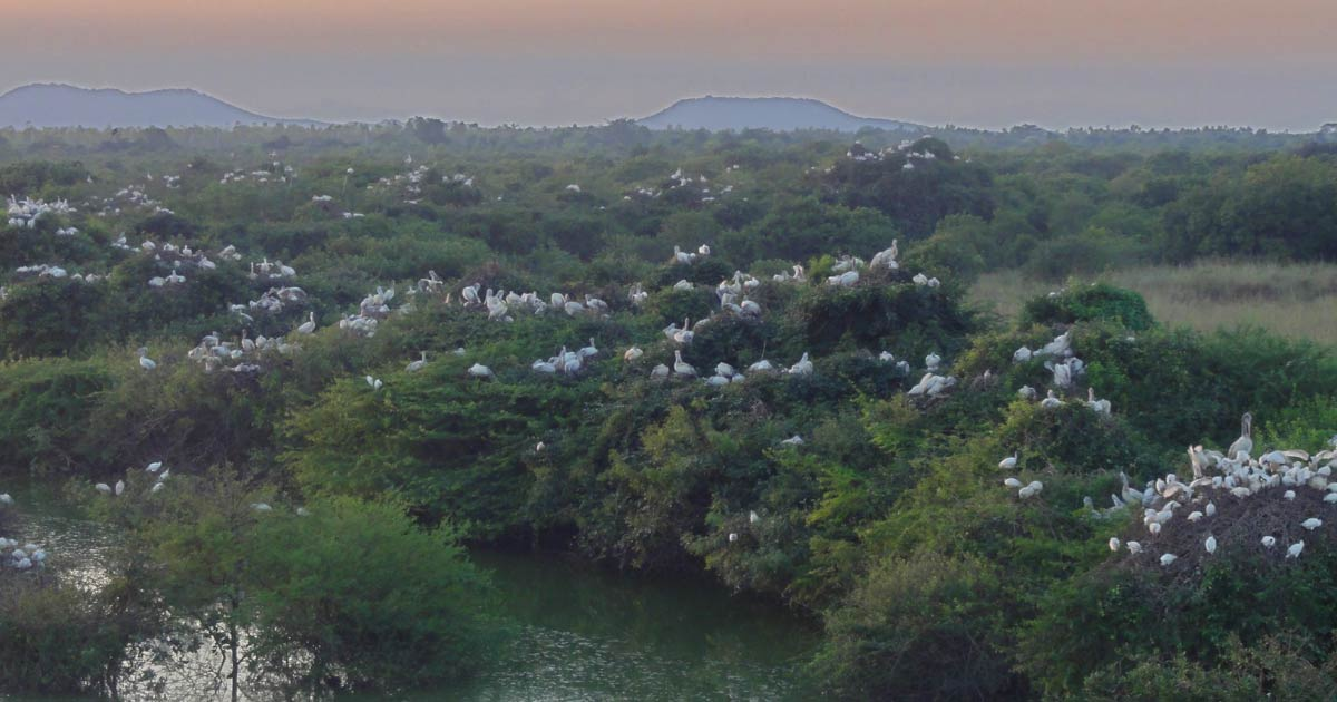 Nelapattu-Bird-Sanctuary