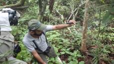 Przewodnik z laserem to wielkie ułatwienie w obserwowaniu ptaków w lesie tropikalnym