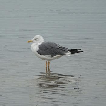 Birdfinders – Birdwatching Holidays