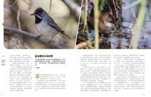Birding Israel-3