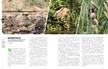 Birding Israel-4