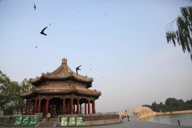 swifts-at-summer-palace