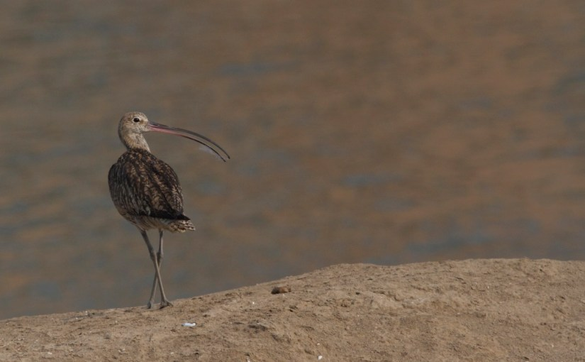 China Takes Important Step Towards Protecting Remaining Intertidal Mudflats