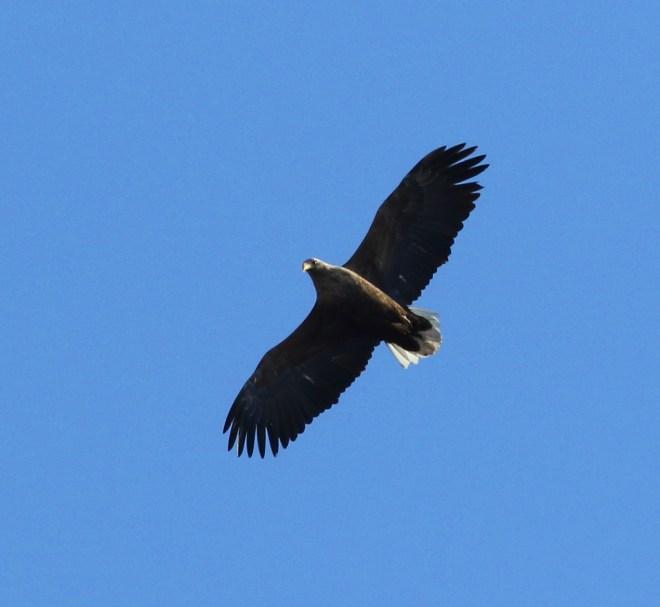 2019-01-28 wt eagle, shisanling (cm)