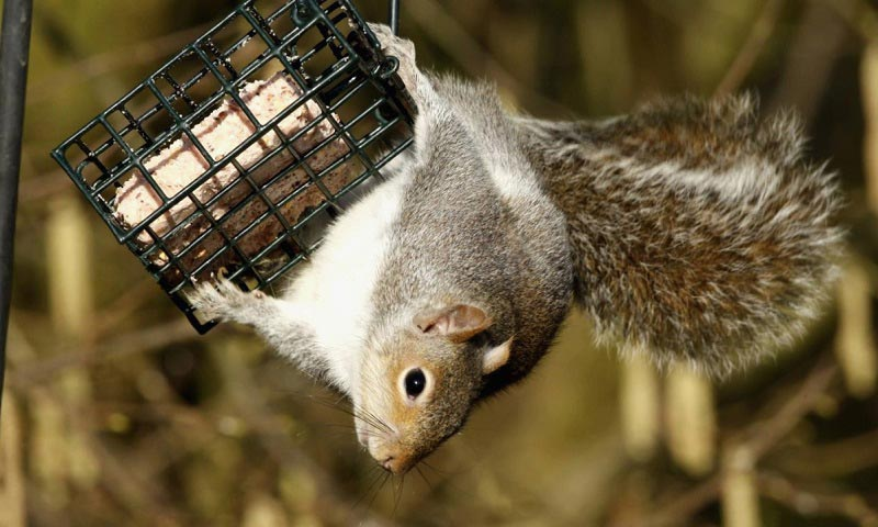 20 best squirrel proof