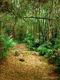 07 Birdingmurcia - Cynthia Bandurek - landscape