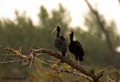14 Birdingmurcia - Cynthia Bandurek