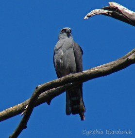 20 Birdingmurcia - Cynthia Bandurek