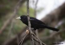 25 Birdingmurcia - Cynthia Bandurek