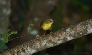 38 Birdingmurcia - Cynthia Bandurek