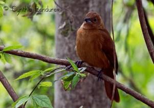 45 Birdingmurcia - Cynthia Bandurek