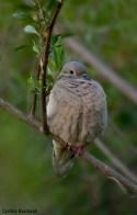 47 Birdingmurcia - Cynthia Bandurek