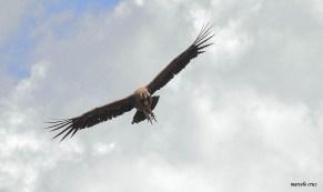 14 Birdingmurcia - Marcelo Cruz