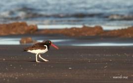 25 Birdingmurcia - Marcelo Cruz