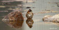 31 Birdingmurcia - Marcelo Cruz
