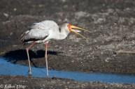 04 Birdingmurcia - Kique Ruiz