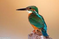 12 Birdingmurcia - Kique Ruiz