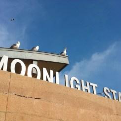 Seagulls at Moonlight State Beach