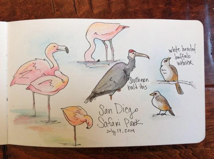 San Diego Safari Park sketches