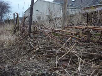 Raspberry-weave fence