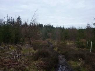 West Woods