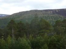 Scots Pine & Larch