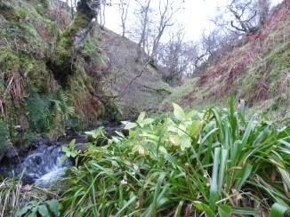 Lush vegetation and high biodiversity