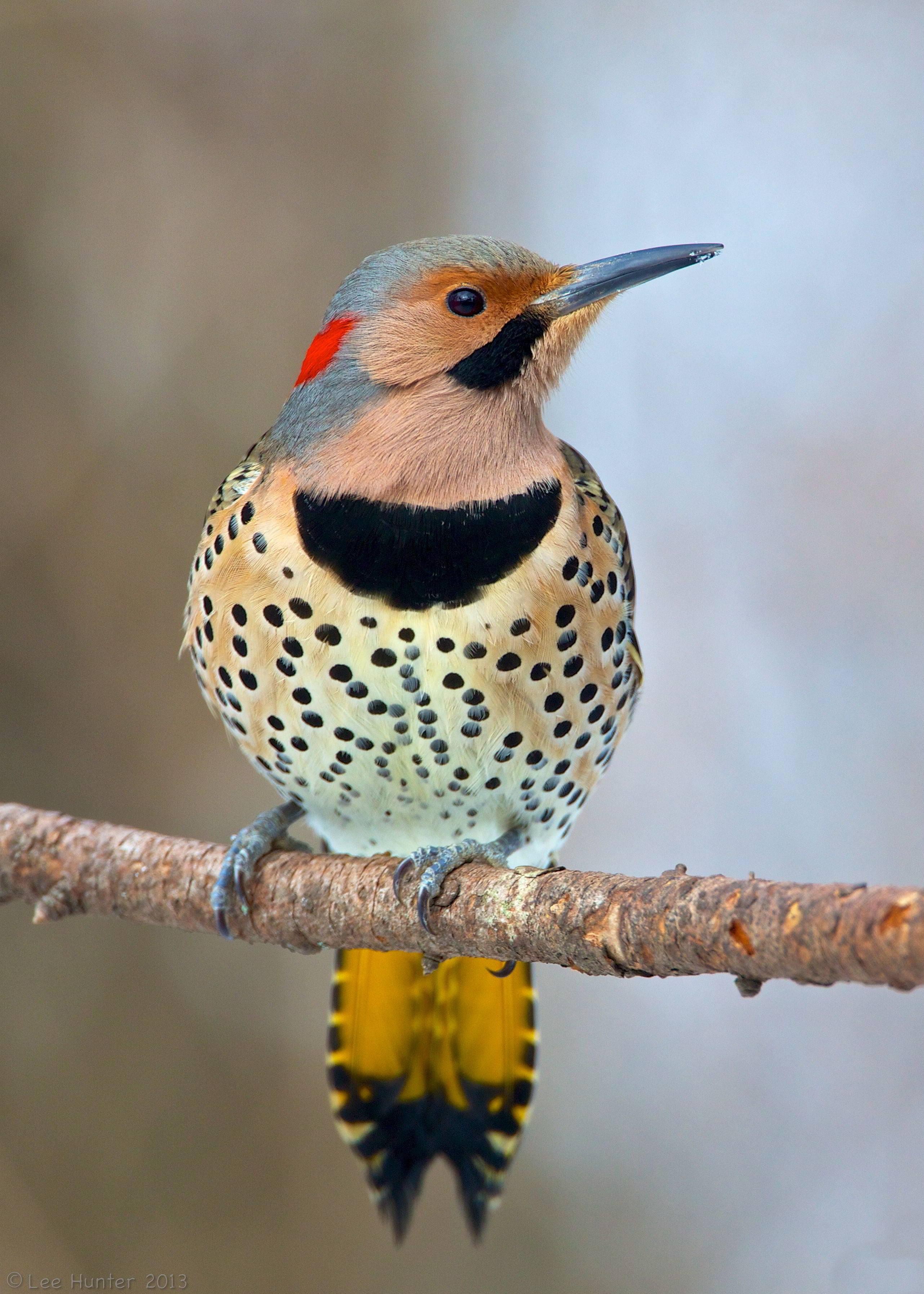 Types Of Birds Of Alabama List Identification