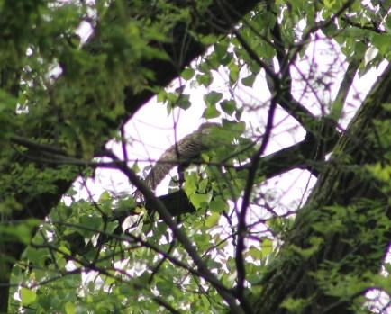 Owlet Wing (Image by David Horowitz)