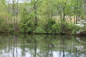 Pond (Image by BirdNation)