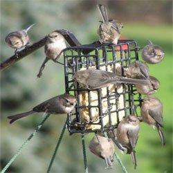 Feeding Activity Starting To Pick Up