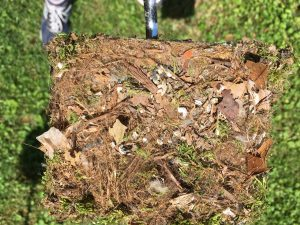 tufted titmouse nesting material 1