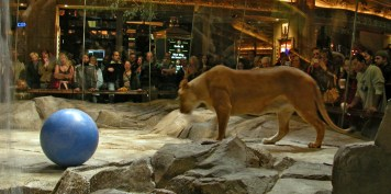 Mgm_grand_tiger_exhibit