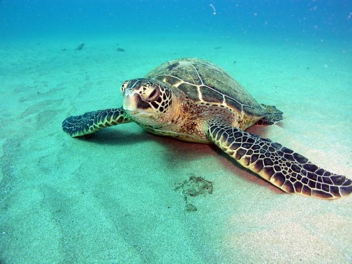 Top 10  des choses à faire à Hawaï