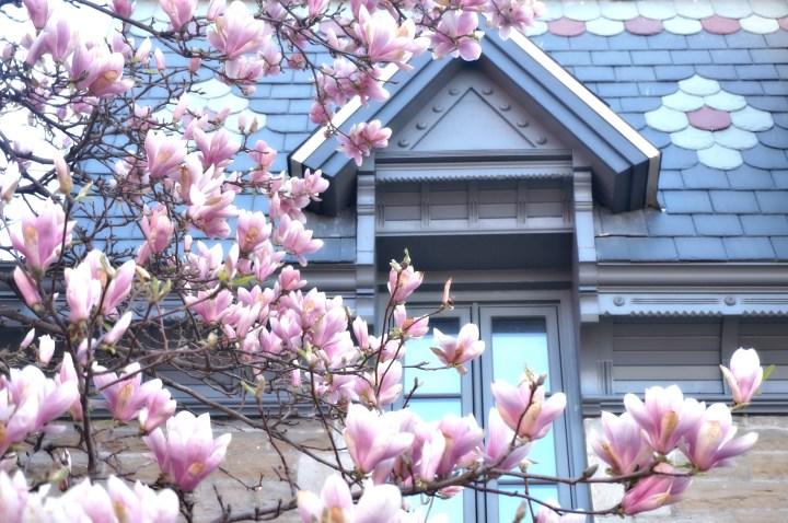 Quand le printemps arrive à Montréal