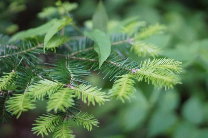 plante-sentier