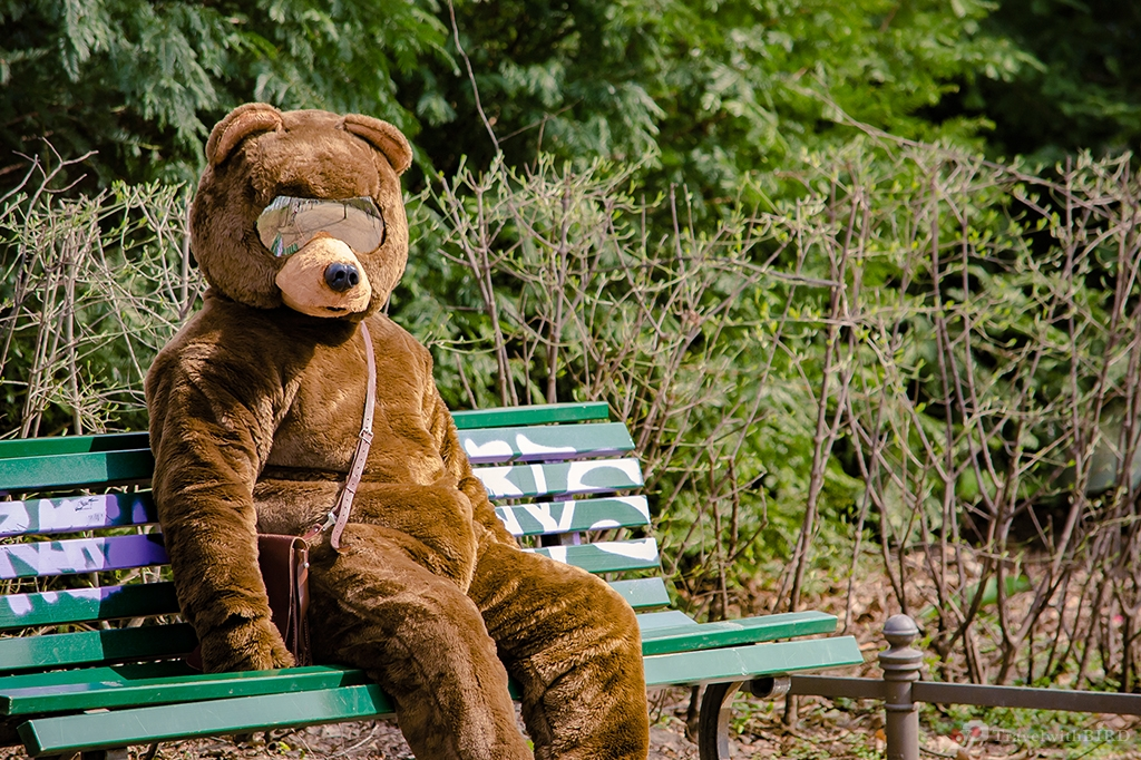 Berliner Bear resting on a Park bench