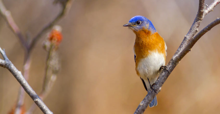 St. Catharines Birds