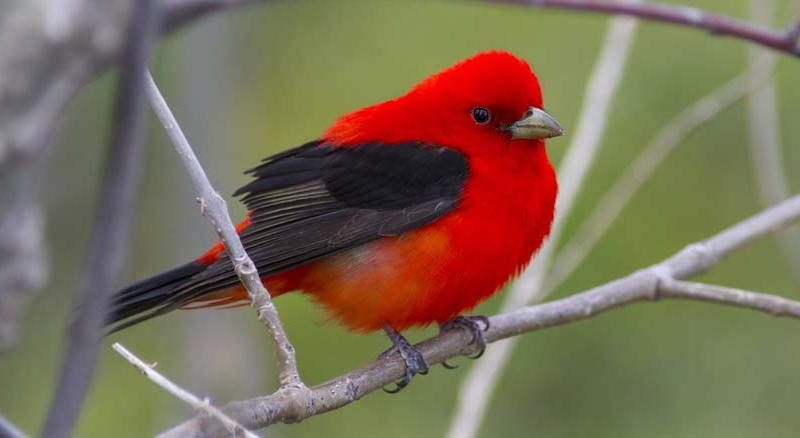 Point Pelee Bird Photography