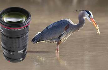200mm lens for bird photography